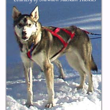 Alaskan Husky Photo Gallery...