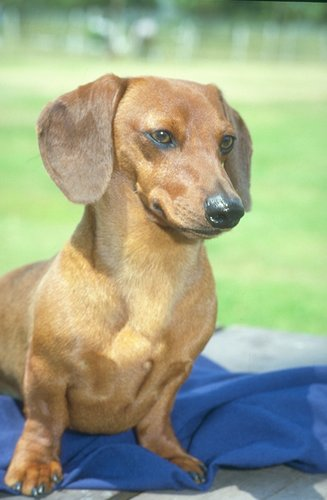 """Home » Search results for """"Ohio Dog Breeders Page 2 Puppyfindcom"""""""