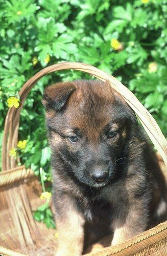puppy find.com