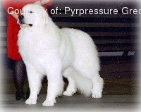 Great Pyrenees pictures...