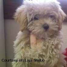 Malti Poo Photos