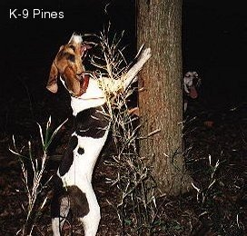 Walker Coon Dogs For Sale In Oklahoma