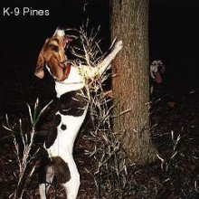 Treeing Walker Coonhound Photos