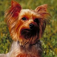 Yorky Photos
