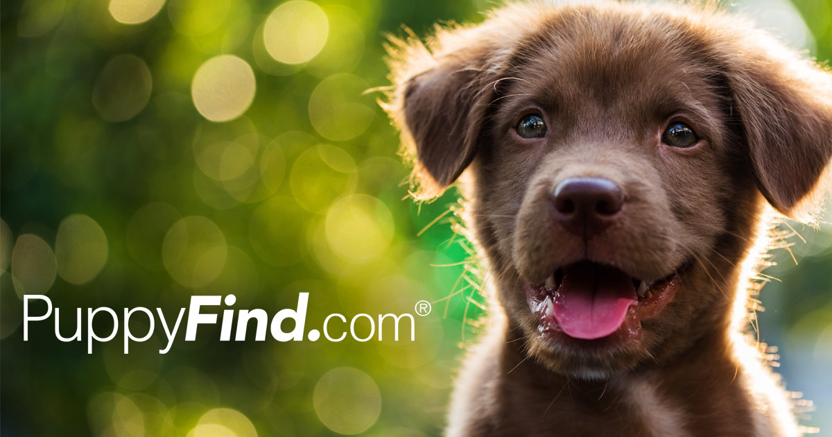 PuppyFind | Puppies for Sale
