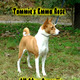 Basenji Puppy for Sale...